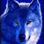FOXWOLF09 . Profile Picture