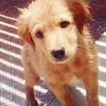San_ti 01 Profile Picture