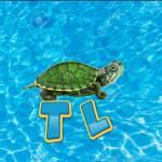 TORTULANDIA Todo sobre tortugas Profile Picture