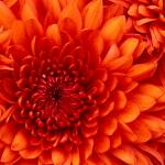 Dario lagunas Profile Picture